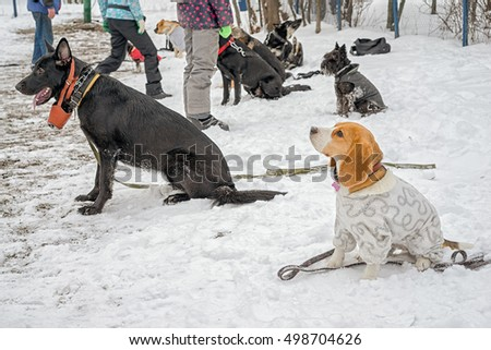 group of dogs at the dog training course in winter