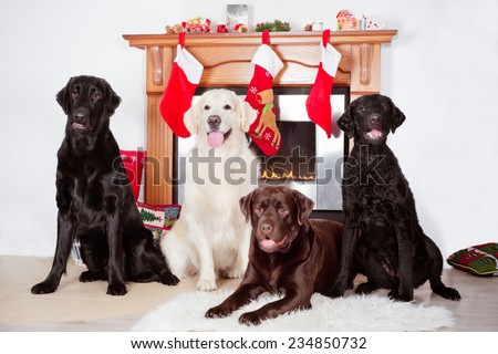 group of dogs by a fireplace decorated for Christmas - stock photo