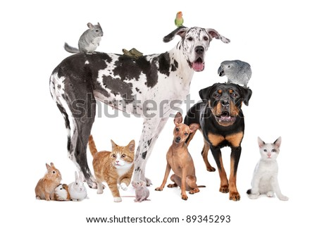 Group of Dogs, cats, birds,mammals and reptiles in front of a white background - stock photo
