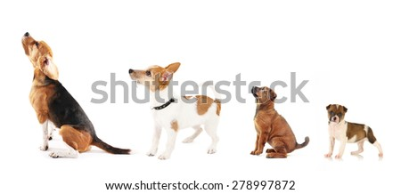Group of dogs different sizes in row, isolated on white - stock photo
