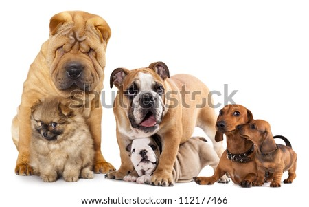 Group of  dogs in front of white background - stock photo