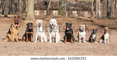 Group of dogs on obedience training - stock photo