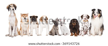 group of dogs on white background - stock photo