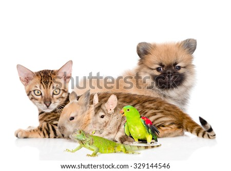 group of domestic animals. Isolated on white background - stock photo