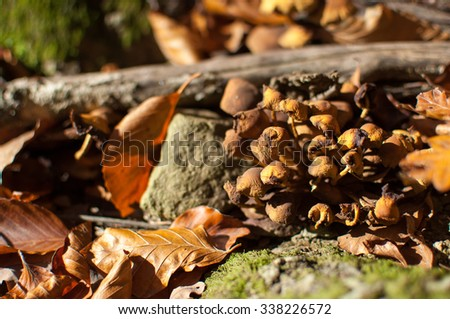 Group of dried wild mushrooms in autumn forest. - stock photo