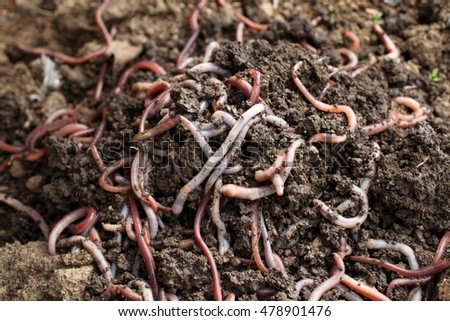 Group of earthworms in the earth