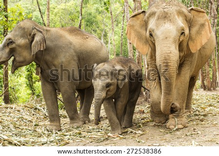 Group of elephant jungle in Thailand. - stock photo