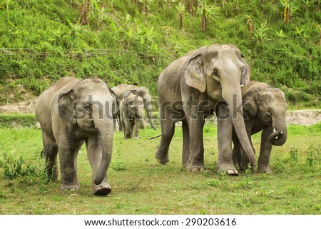 Group of elephant jungle in Thailand.