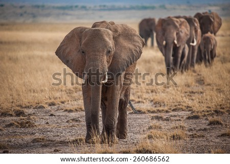 Group of elephants - stock photo