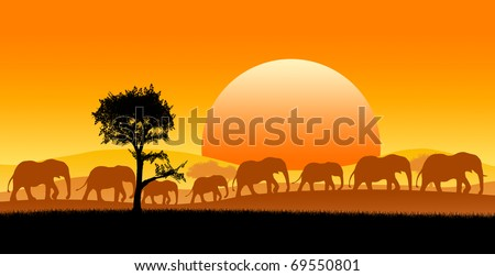 Group of elephants in africa safari - stock photo