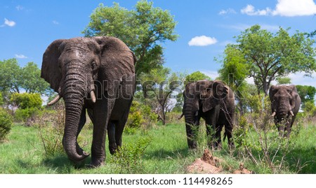 Group of elephants walking through the wilderness
