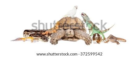 Group of exotic pets sitting together and interacting over white - stock photo
