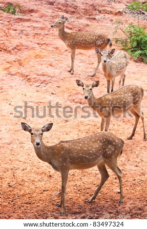 Group of Fallow deer  close up - stock photo
