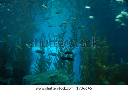Group of fishes swimming by - stock photo