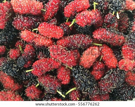 group of fresh organic mulberry fruit