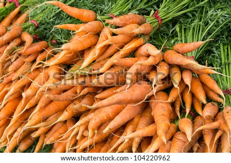 Group of fresh picked carrots on display - stock photo