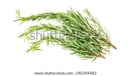 Group of fresh rosemary leaves - stock photo