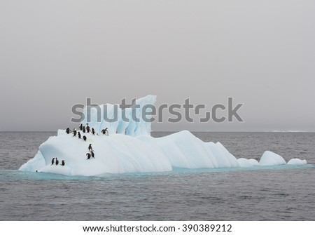 Group of gentoo penguins on the floating iceberg, grey sea and sky, Antarctic Peninsula - stock photo