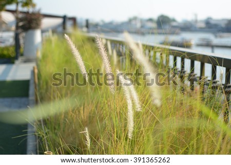Group of grass on a porch near river.