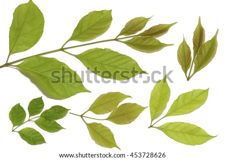 group of green leaf on white paper,isolated on white