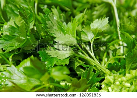 Group of green parsley with water drops.