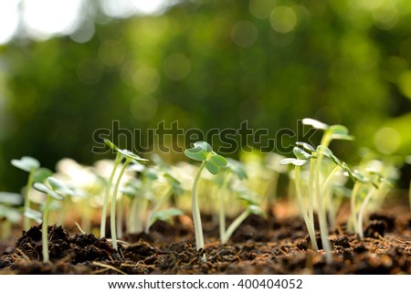 Group of green sprouts growing out from soil - stock photo
