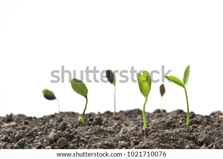 Group of green sprouts growing out from soil isolated on white background
