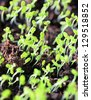 Group of green sprouts in soil - stock photo