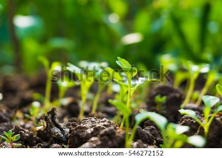 Group of growing green sprout on soil, Energy concept