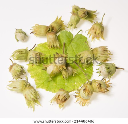 Group of hazel nuts isolated on white background - stock photo
