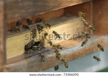 Group of honeybees flying into a vintage beehive - stock photo