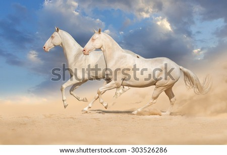 Group of horse run gallop with clouds of dust - stock photo