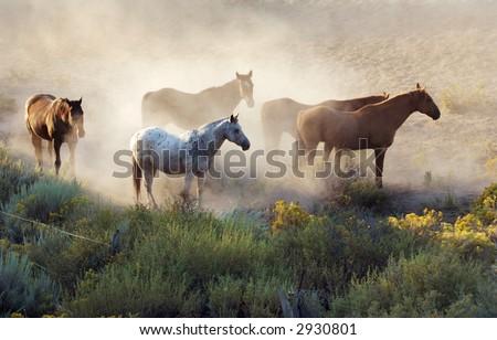 Group of Horses - stock photo