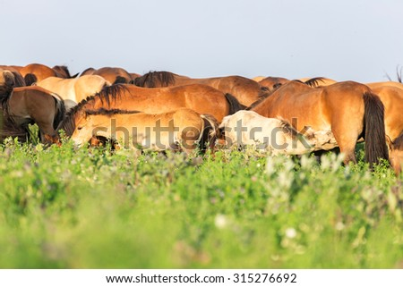 Group of horses. - stock photo