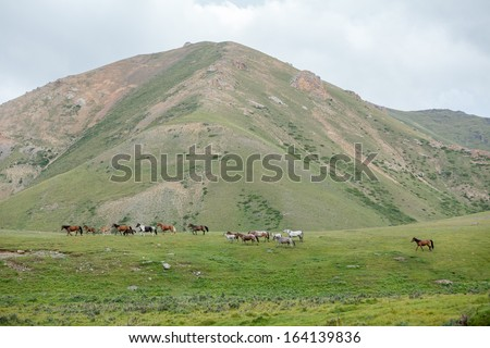 Group of horses going somewhere away - stock photo