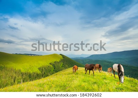group of horses grazing on a green mountain meadow in the mountains - stock photo