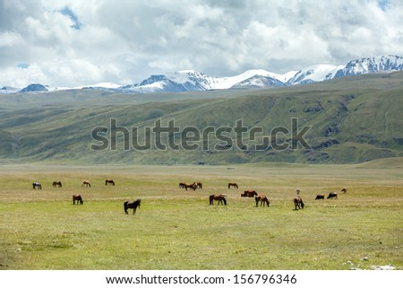 Group of horses pasturing in the mountains - stock photo