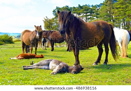 Group of horses resting in the mountains