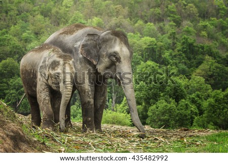 Group of Indian elephant in jungle.