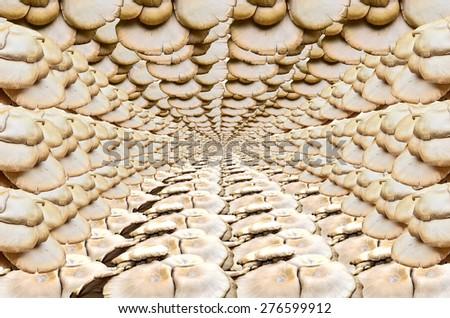 Group of light brown Mushroom blackground - stock photo