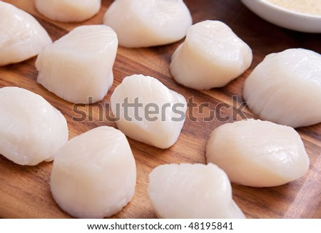 group of many fresh scallops on a wooden cutting board ready to be cooked