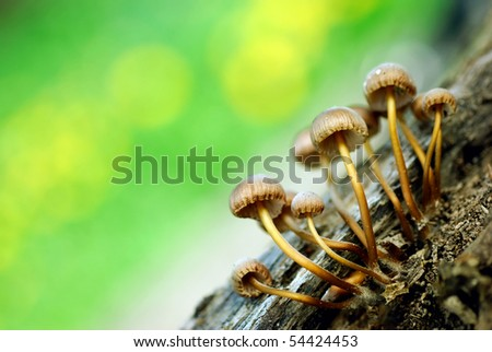 Group of mushrooms - stock photo