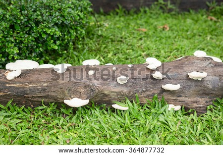 Group of mushrooms on a tree - stock photo