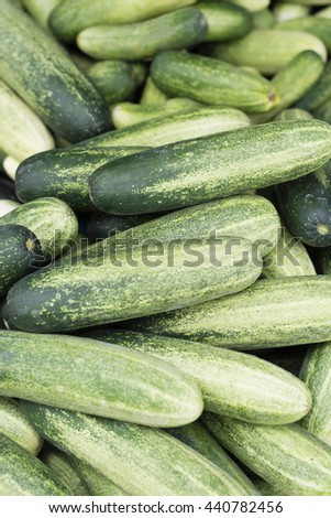 group of organic cucumber in the market