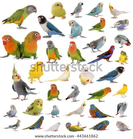 group of parrots in front of white background - stock photo
