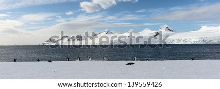 Group of penguins on the ice near the ocean