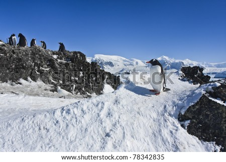 group of penguins on the rocks have a good time - stock photo