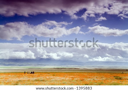 Group of people on the poppy meadow under the cloudy sky. - stock photo