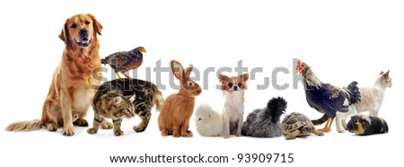 group of pet in front of a white background - stock photo