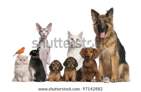 Group of pets: dog, cat, bird, rabbit - stock photo